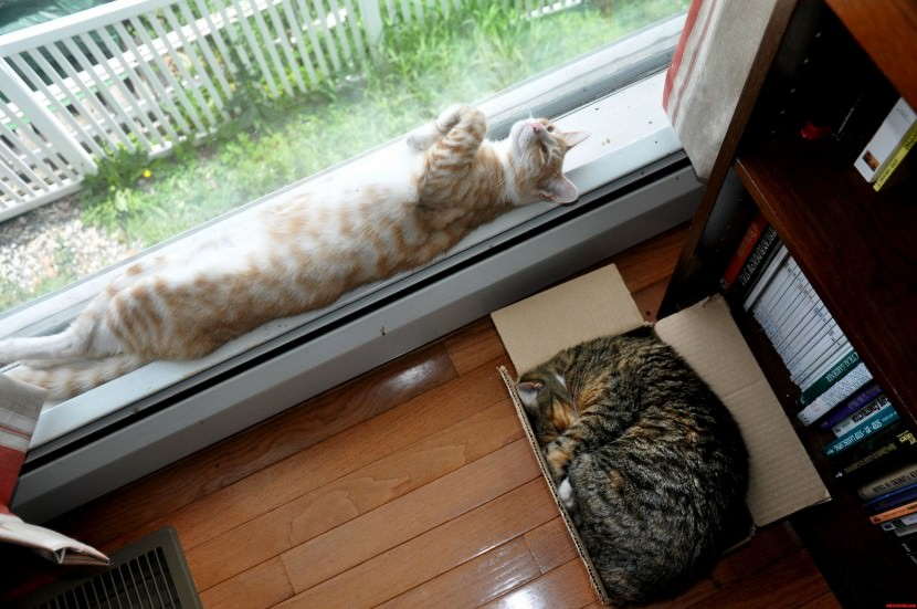 Sunshine And Olive Different Sleeping Styles cat