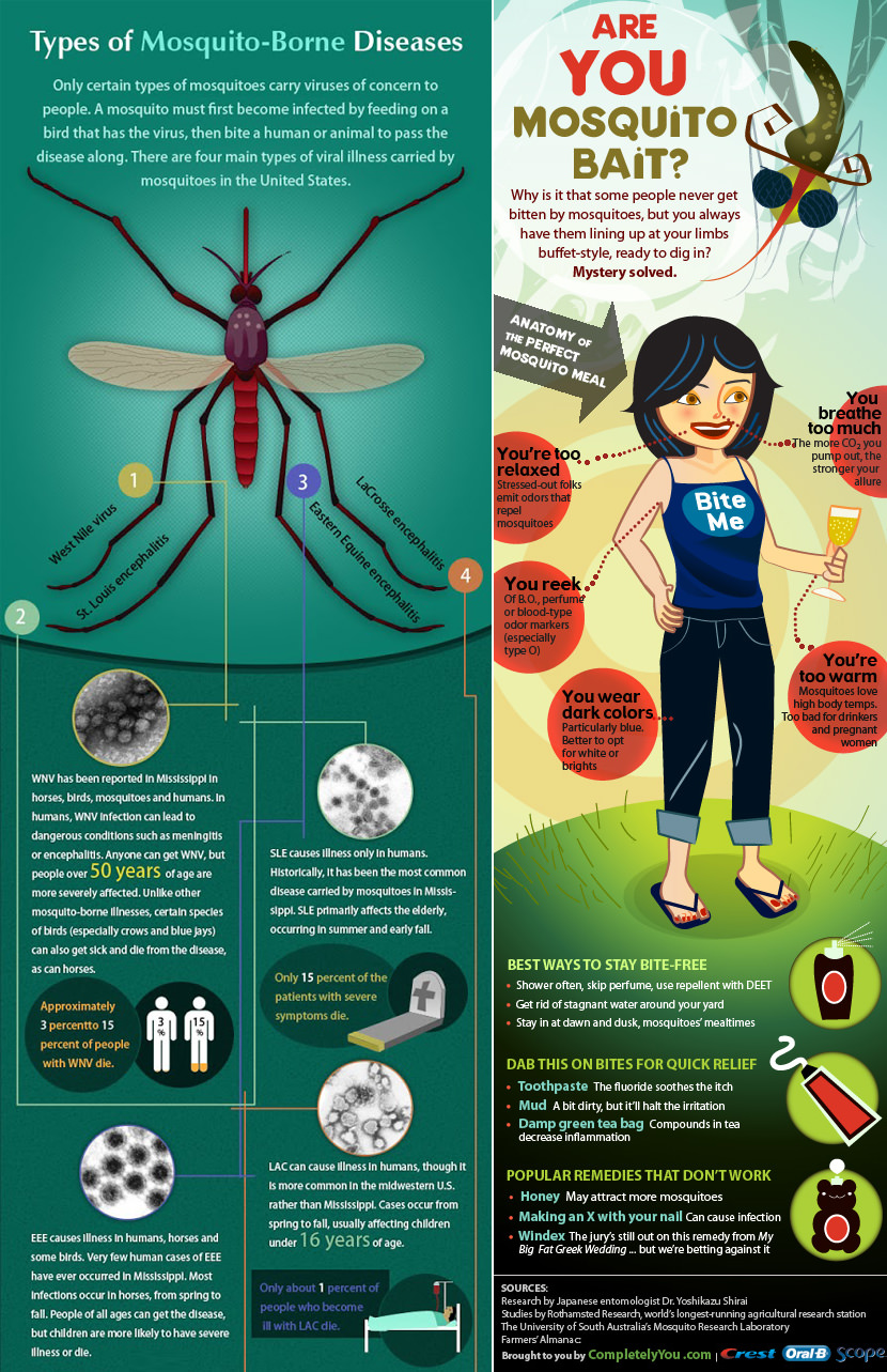 mosquito infographic Why Mosquito are attracted to You