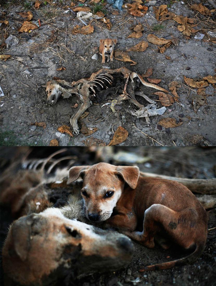 puppy dog mother love die death