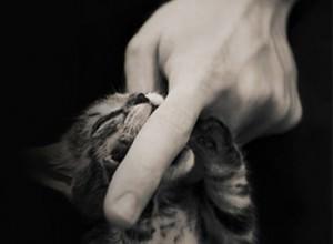 530-kitten-facebook-timeline