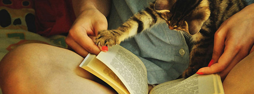 Cute Cat Reading