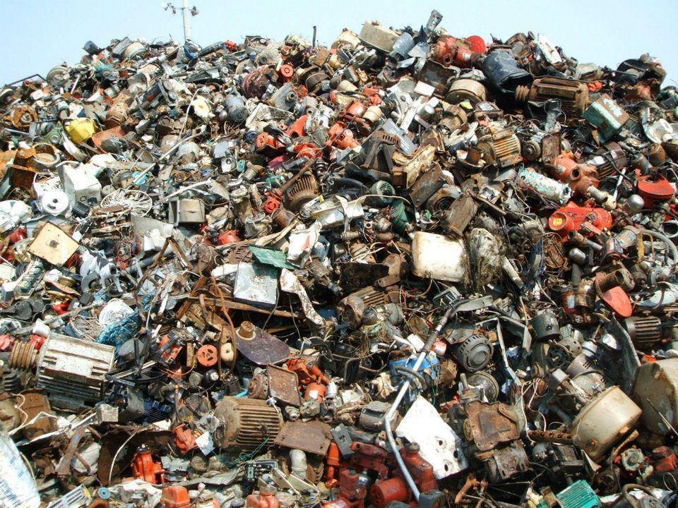 cat in junk pile