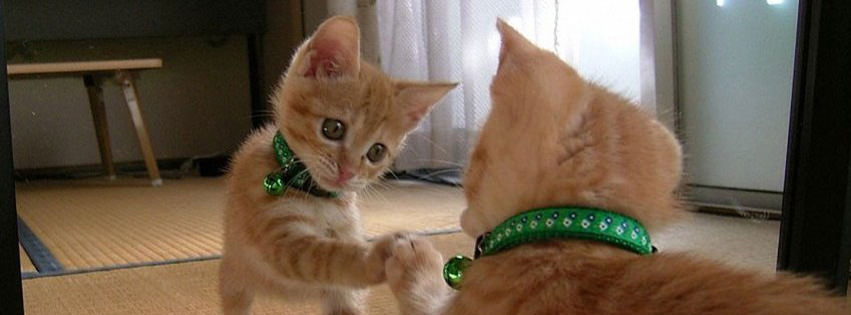 funny cat wallpaper facebook timeline cover