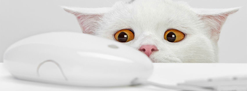 innocent cat facebook cover
