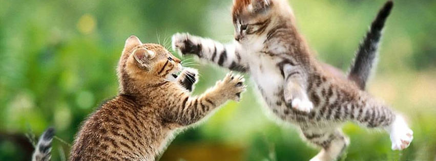jumping cats facebook cover