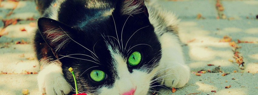 nature cats animals photography cherries green eyes feline pets