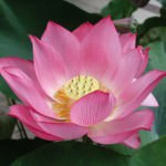 530-buddha-buddhism-quote