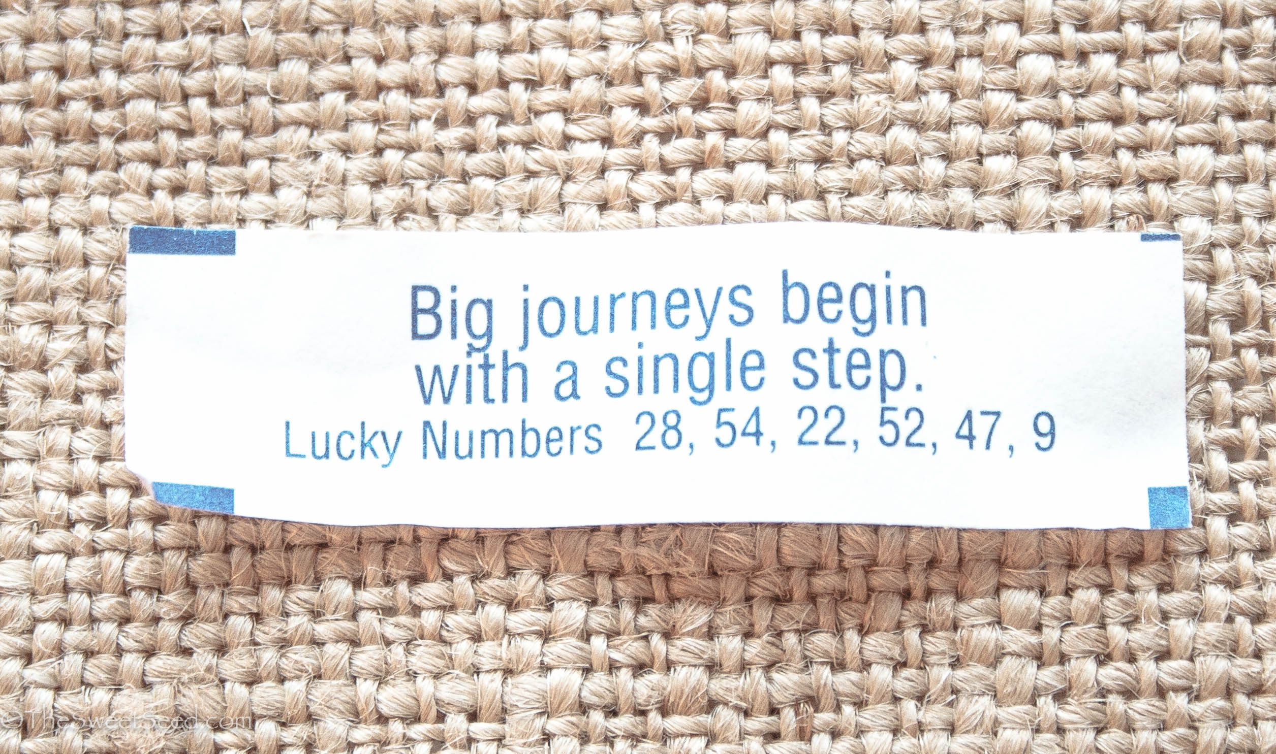 photograph relating to Printable Funny Fortune Cookie Sayings identified as 40 Suitable Chinese Fortune Cookies Quotations Sayings Concerning Existence