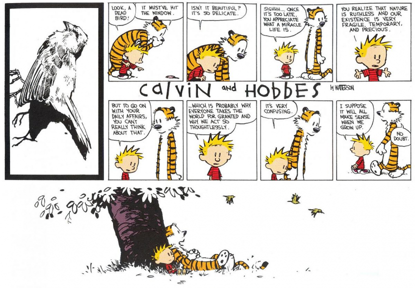 calvin hobbes bird meaning of life and death