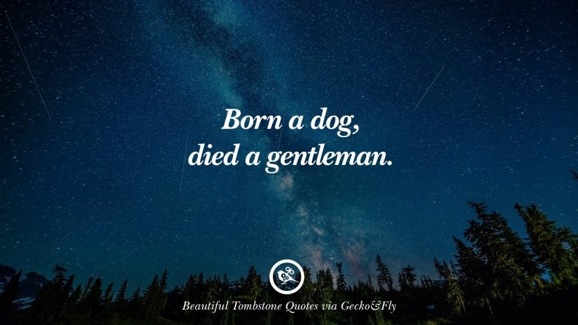 Born a dog, died a gentleman. Beautiful Tombstone Quotes For Your Beloved Cat or Dog