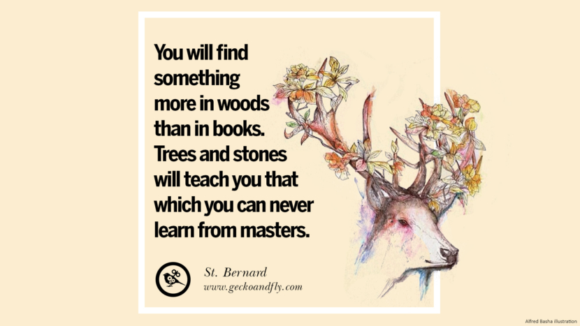 You will find something more in woods than in books. Trees and stones will teach you that which you can never learn from masters. - St. Bernard Beautiful Quotes About Saving Mother Nature And Earth