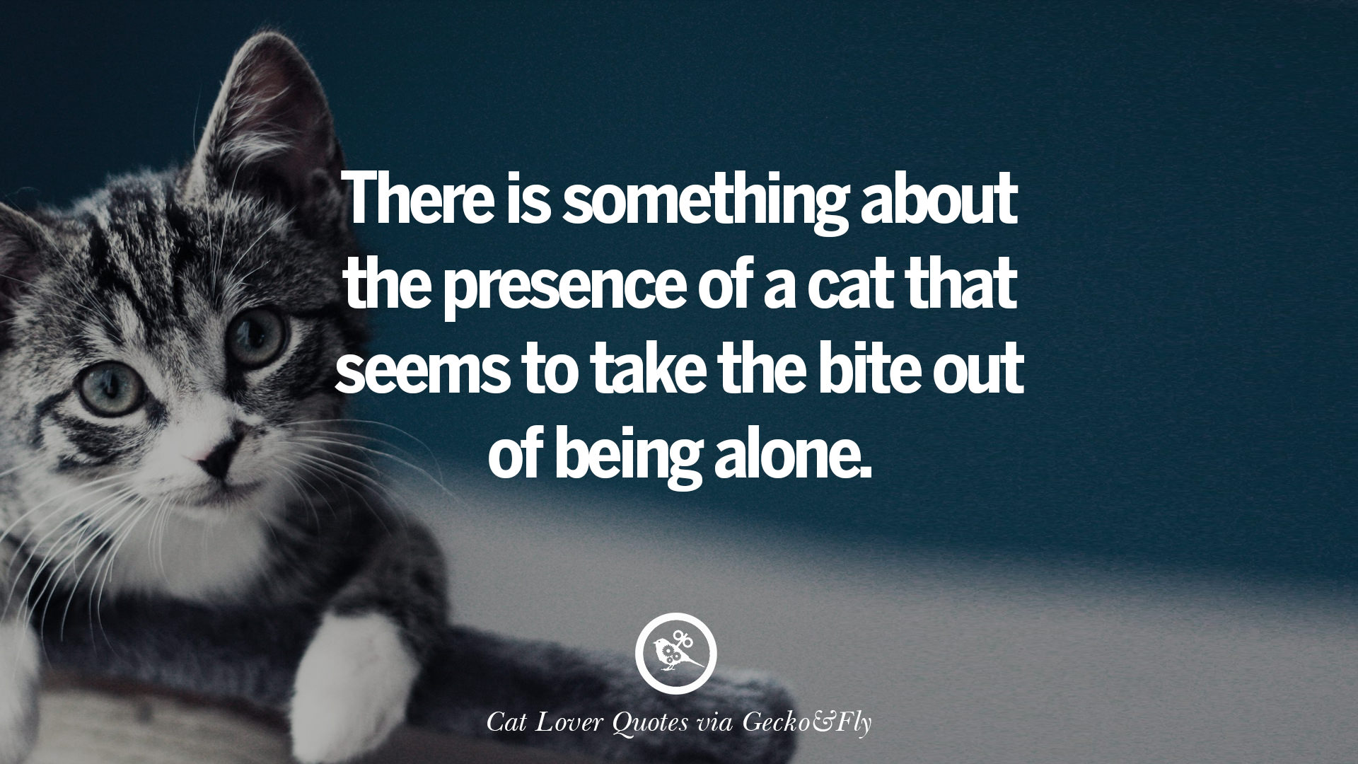 25 Cute Cat Images With Quotes For Crazy Cat Ladies Gentlemen And