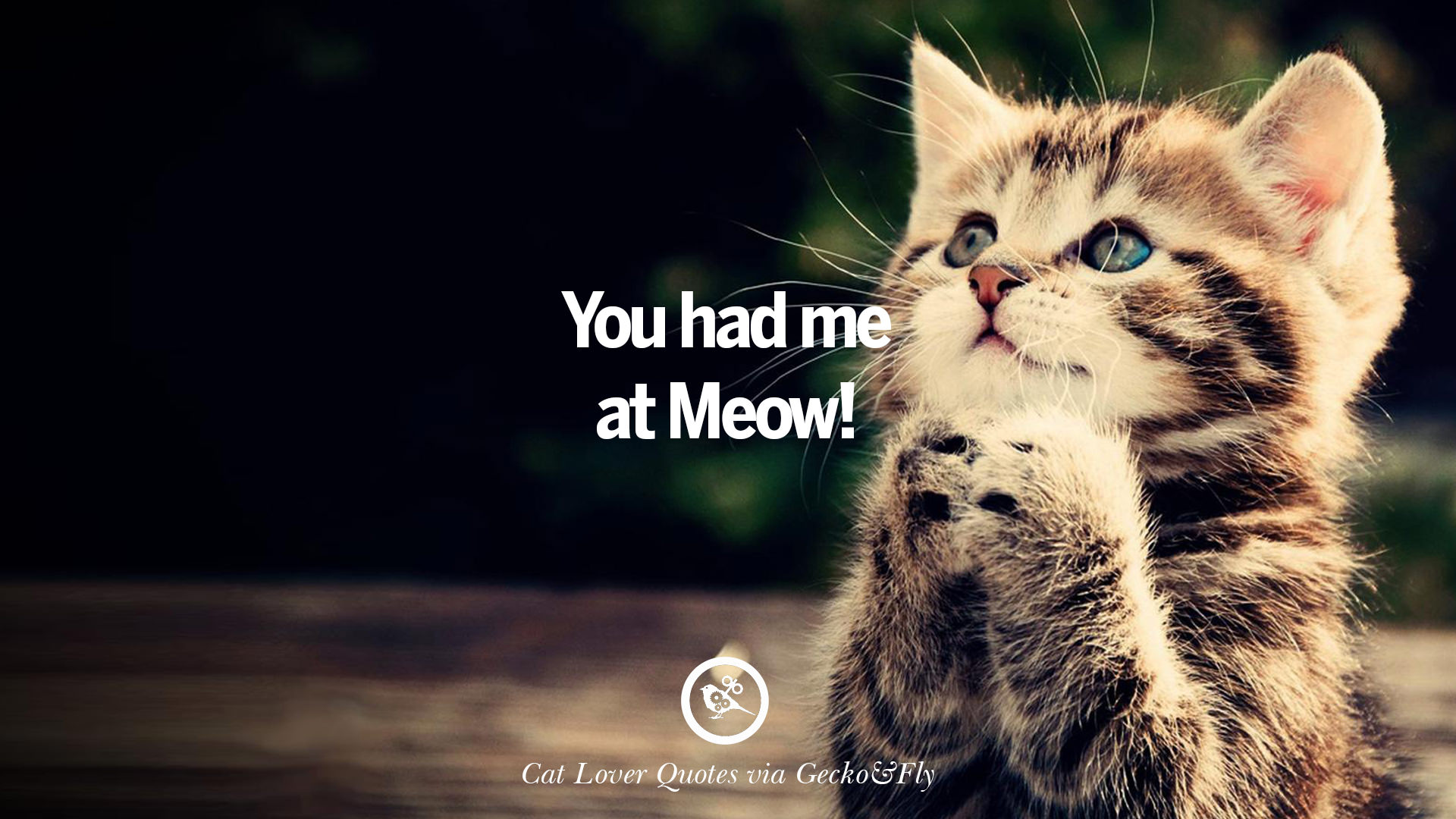 25 cute cat images with quotes for crazy cat ladies