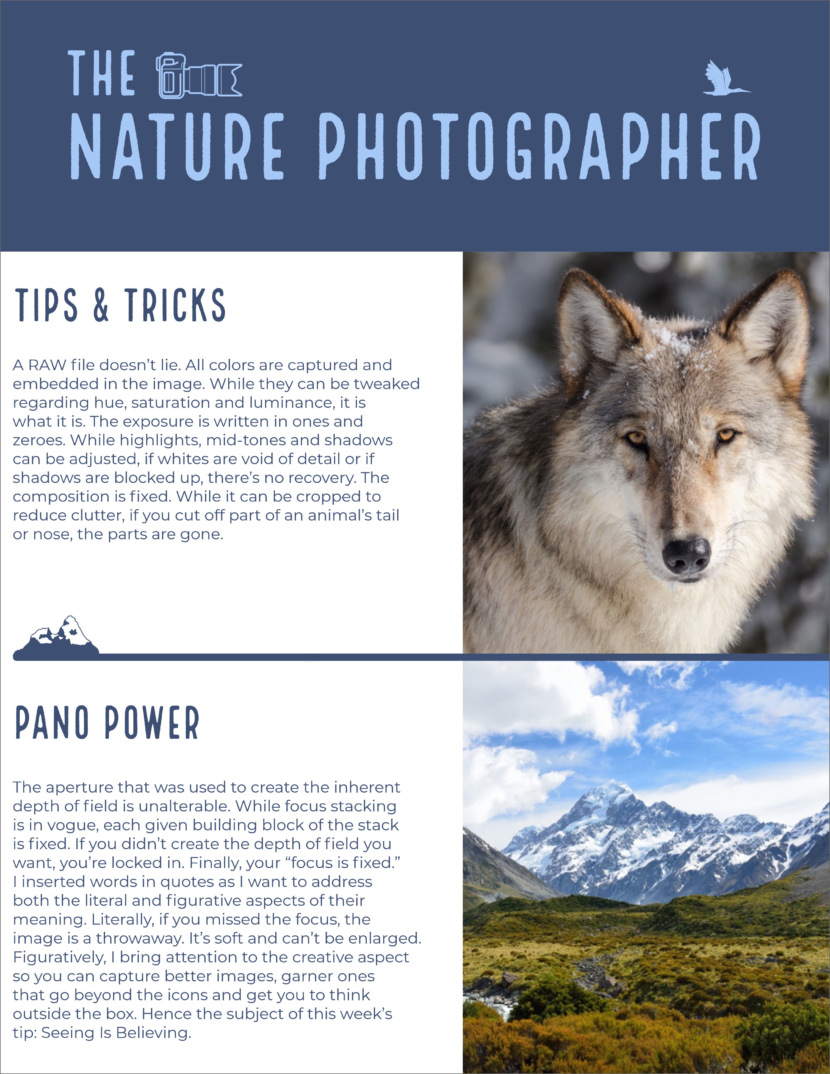 nature photography Screenshot of free printable newsletter template for school and communities